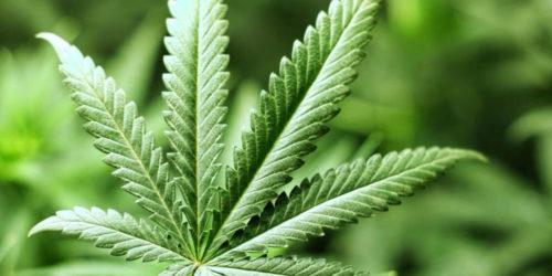 Cannabis_Legale