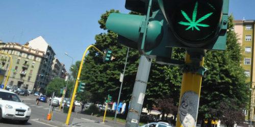 Piazze_Verdi_Cannabis