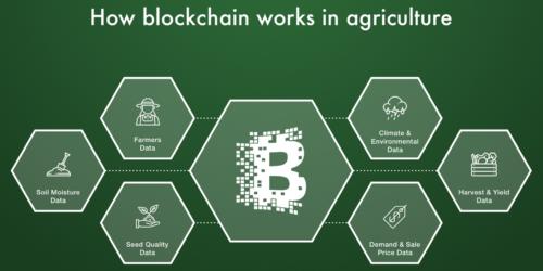 aagricoltura-blockchain