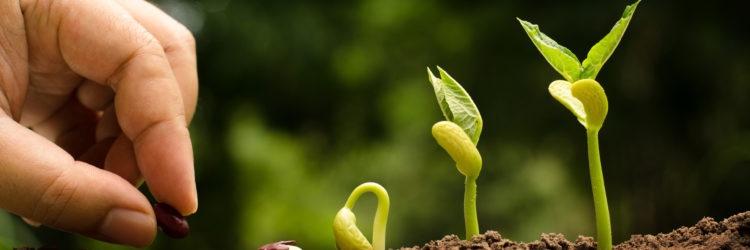 Seedling and Plant sprout growing step over green backgound