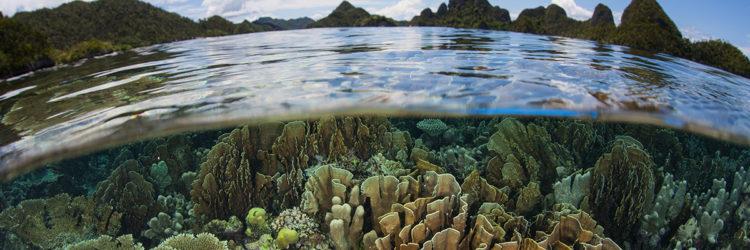 biodiversita-natura-ambiente
